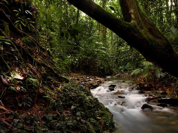 Things to do in Port Douglas Daintree Rainforest